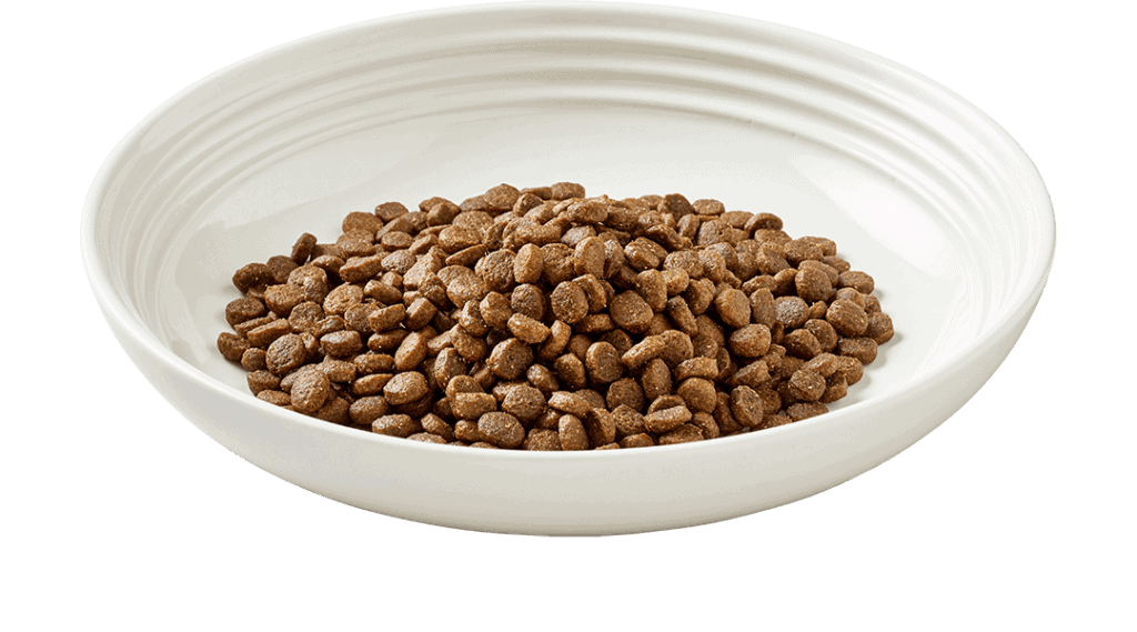 Dry cat food on plate