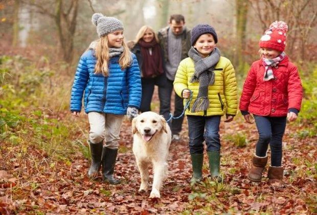 Koirien kävelyttämisohjeet