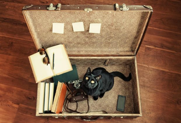 Travelling with Cats: What to Pack