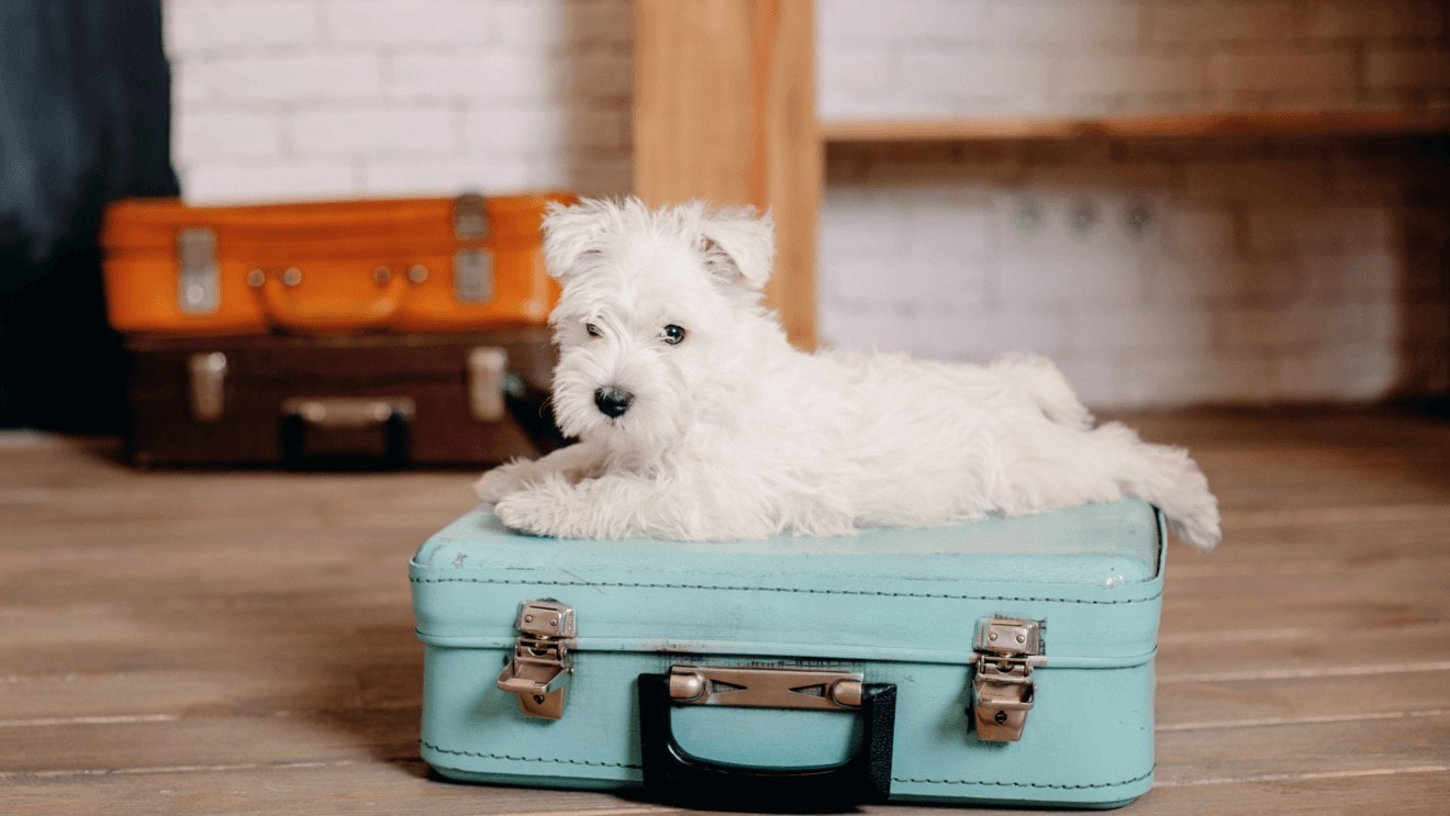 Encore's guide to travelling with a dog