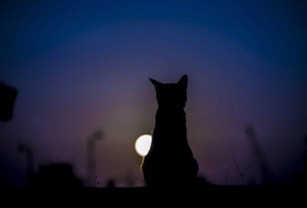 5 Gründe, warum Ihre Katze nachts nicht aufhört zu miauen