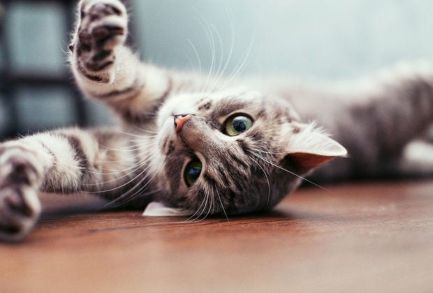 Was man beachten sollte, wenn man sich eine Katze holt