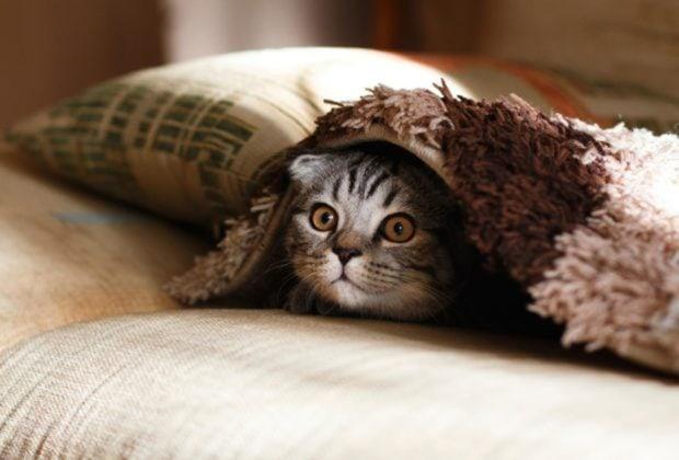 5 Tipps für den Umzug mit Katze