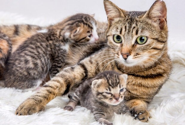 How Many Kittens Can a Cat Have?